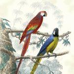 ppd servetten antique parrots